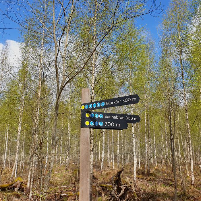 Vandring i Åsnens nationalpark