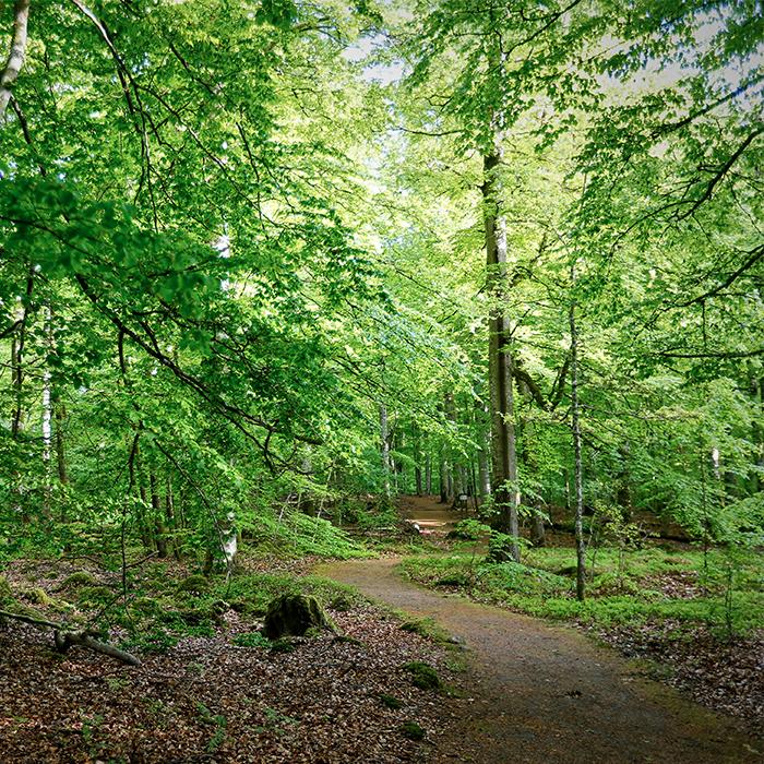 Vandring i Åsnens lövsalar - 9 km