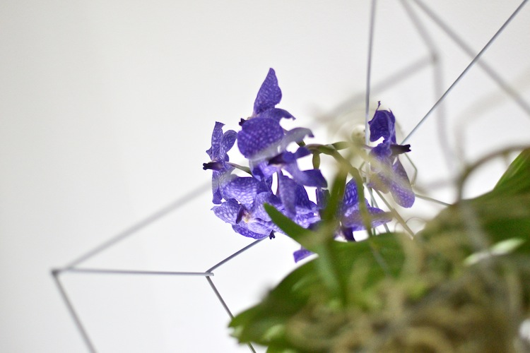 orkidea_interiordesign_decoration_yellowmood_hannamarirahkonen_diy_flowers 5