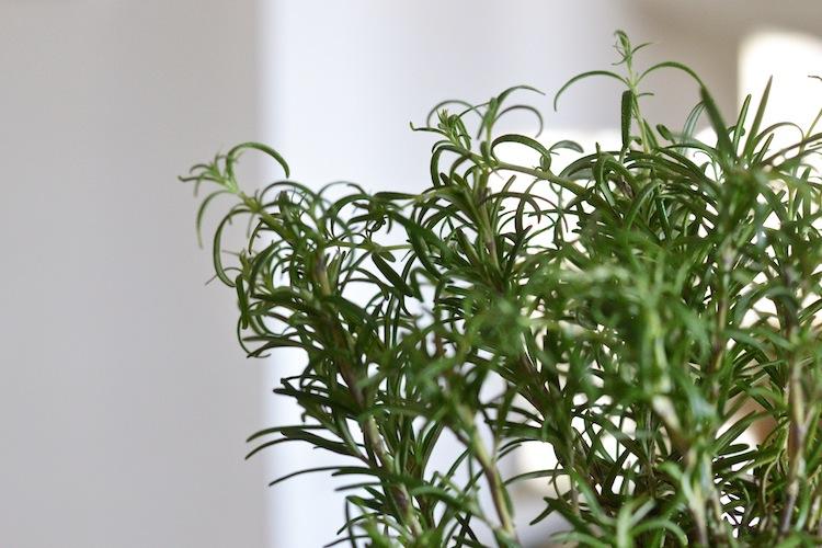 greens_herbs_alejandrojungerclean_yellowmood_hannamarirahkonen