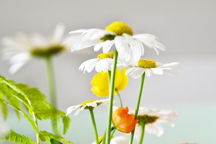 summerflowers_yellowmood_hannamarirahkonen_kukat 3