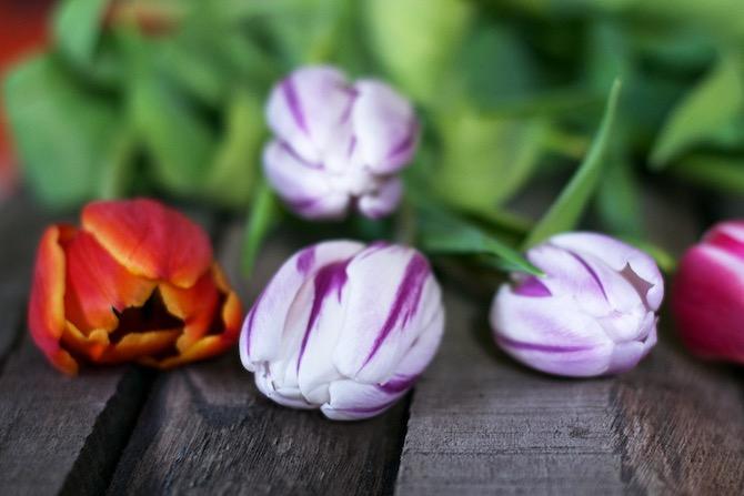 flowers_jolie_yellowmood_hannamarirahkonen