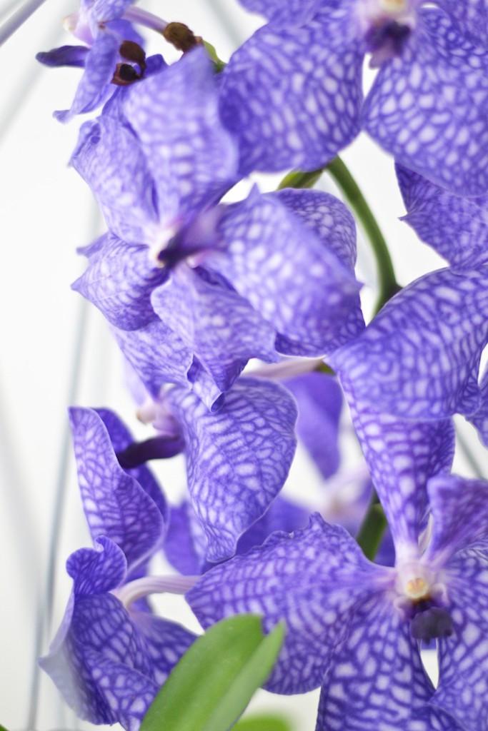 orkidea_interiordesign_decoration_yellowmood_hannamarirahkonen_diy_flowers 3