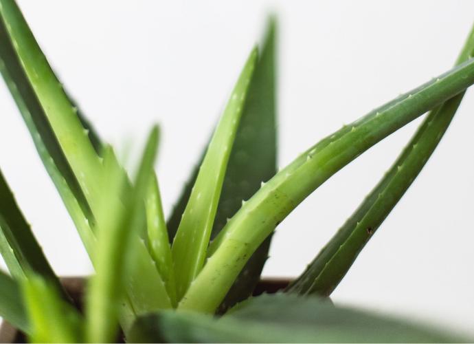 Laboratoire du Haut-Ségalan uusi aloe vera -sarja on herkän ihon pelastaja ja paras valinta kesään