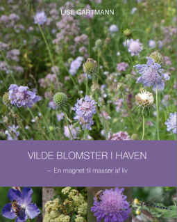 Vilde blomster i haven