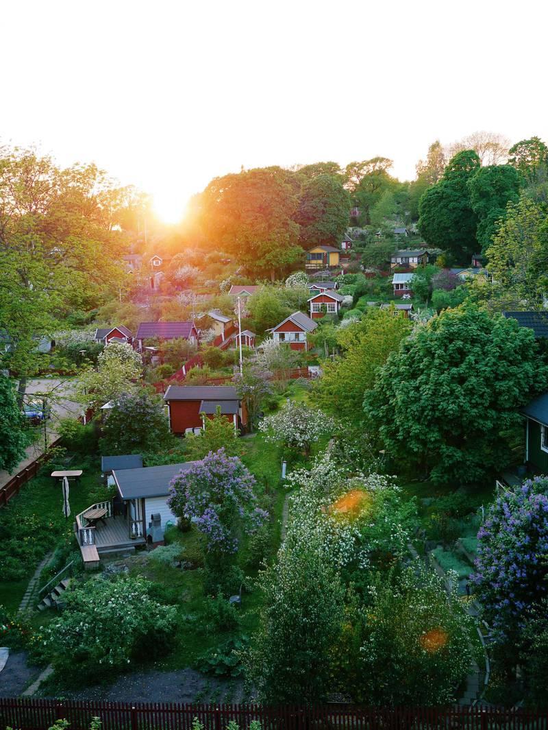 Allotment gardens in Tantolunden, Stockholm