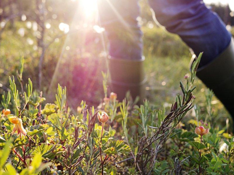A la découverte de la nature à Stockholm